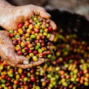 Operatore agricolo per l'innovazione tecnologica e lo sviluppo della green economy